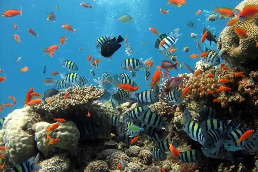 Amed-coral-reef