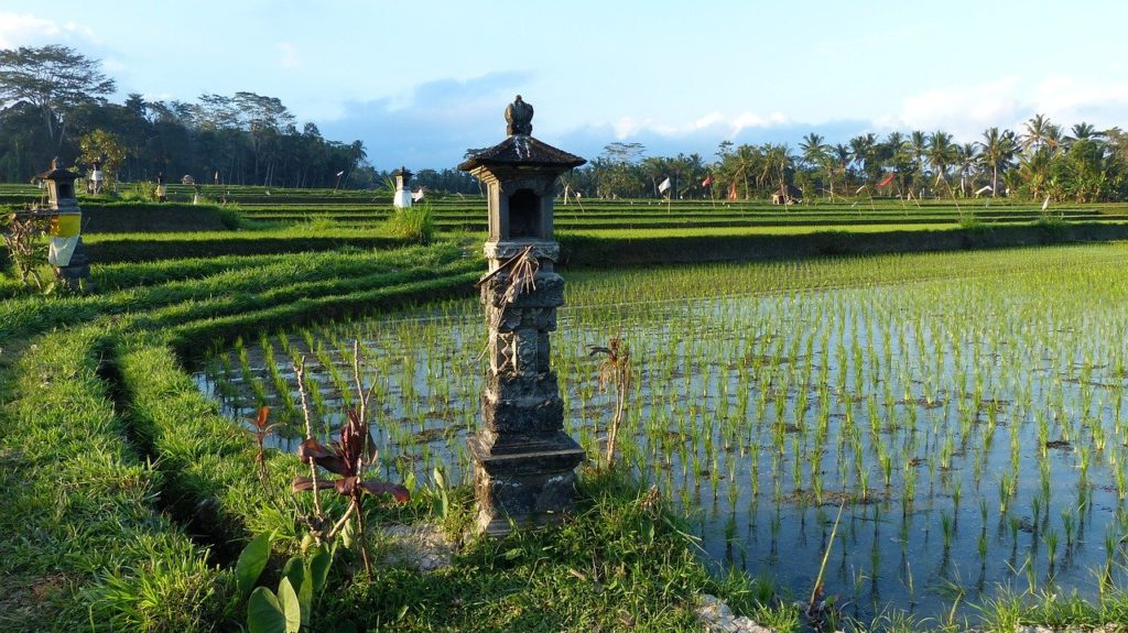 rice-fields-central-Bali